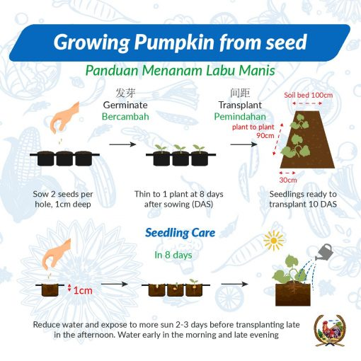Growing Pumpkin from seed