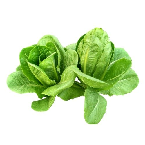 romaine lettuce types soon huat seeds malaysia