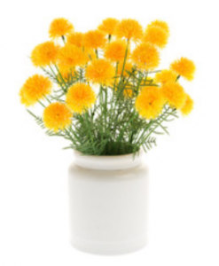 tall marigold seeds