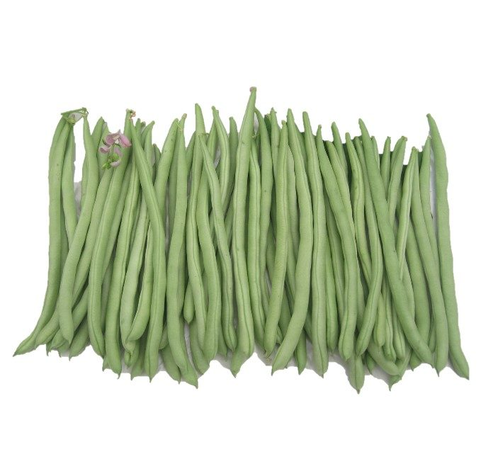 french bean seeds b402