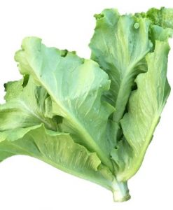 leaf lettuce loosleaf seeds soon huat seeds