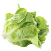 tropical cos lettuce seeds s167