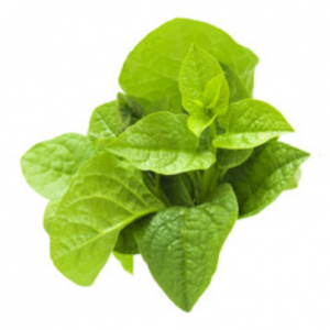 malabar spinach seeds s137