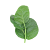 malabar spinach seeds