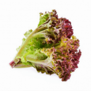 red coral lettuce seeds