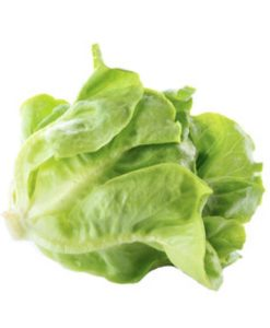 s167 tropical cos lettuce seeds online malaysia