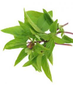 herbs thai basil seeds