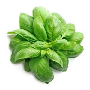 herb seeds sweet basil seeds
