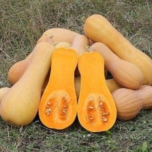 a bunch of butternut squash