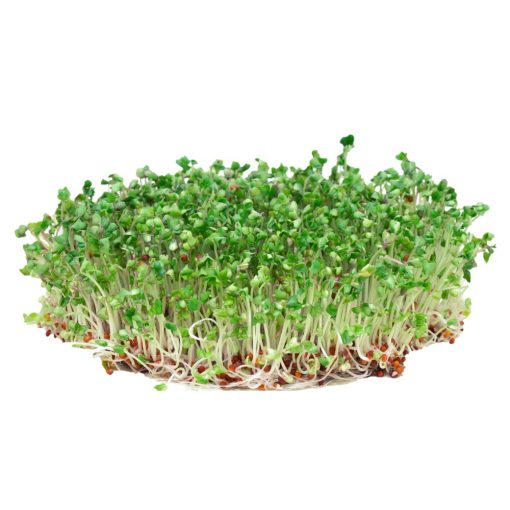 microgreen broccoli seeds