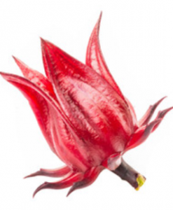roselle seeds online soon huat seeds malaysia