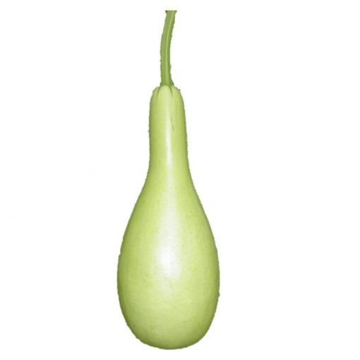 bottle gourd calabash seeds soon huat seeds