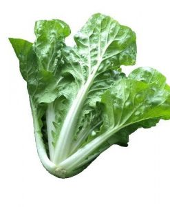chinese cabbage one king bok choy soon huat seeds