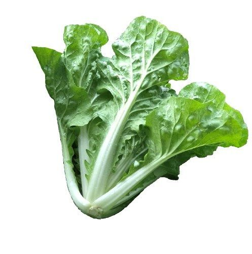chinese cabbage seeds s183