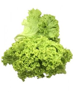 green coral lettuce seeds online malaysia soon huat seeds (Custom)
