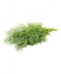 dill seeds soon huat seeds malaysia