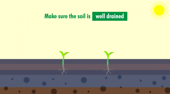 make sure the soil is well drained