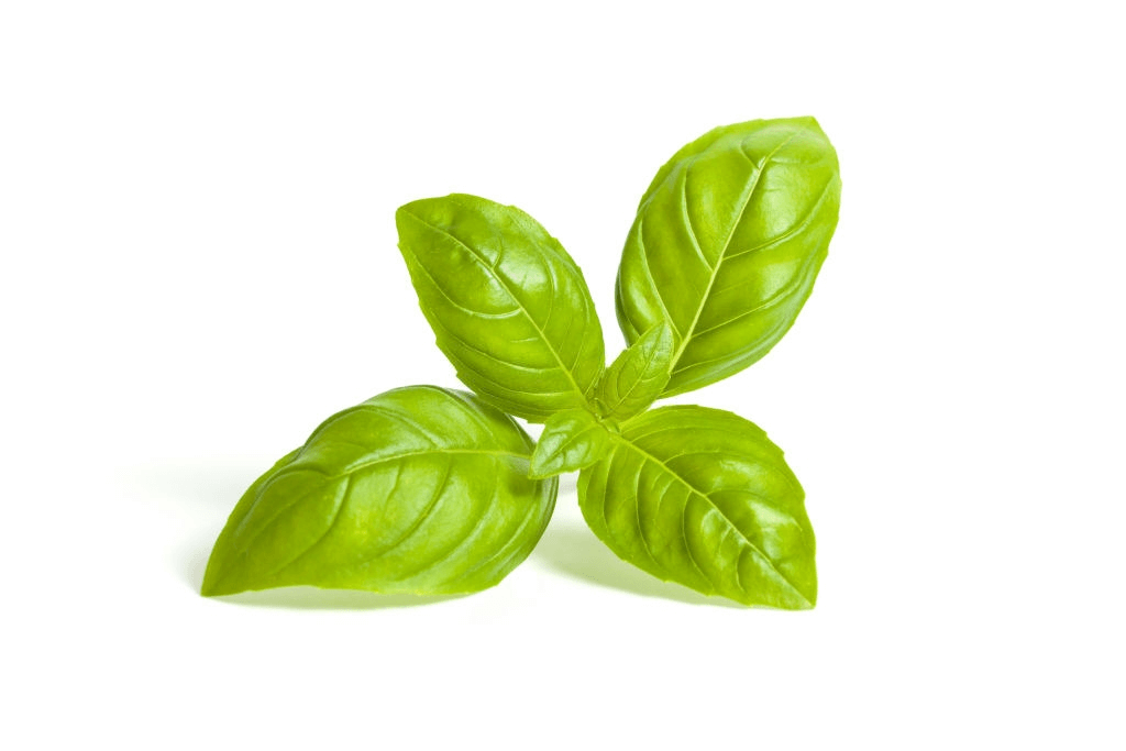 Easy herbs to grow: basil