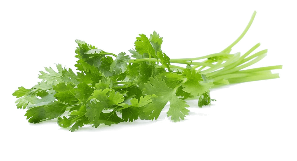 Easy herbs to grow: coriander