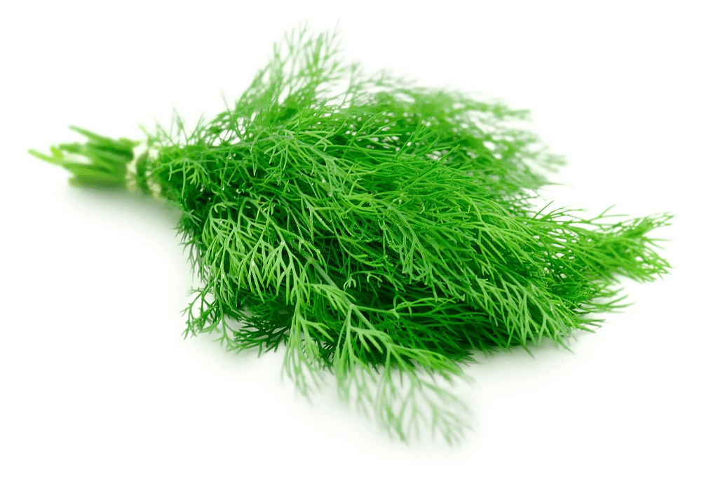 Easy herbs to grow: dill