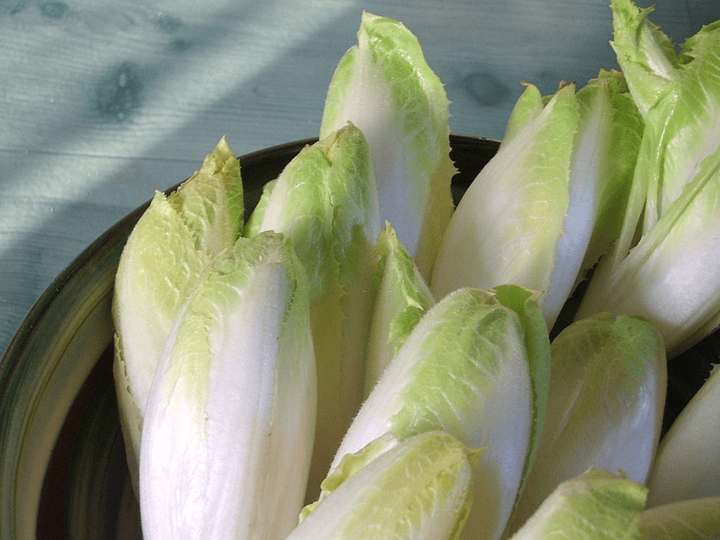 Easy salad greens to grow: Endive