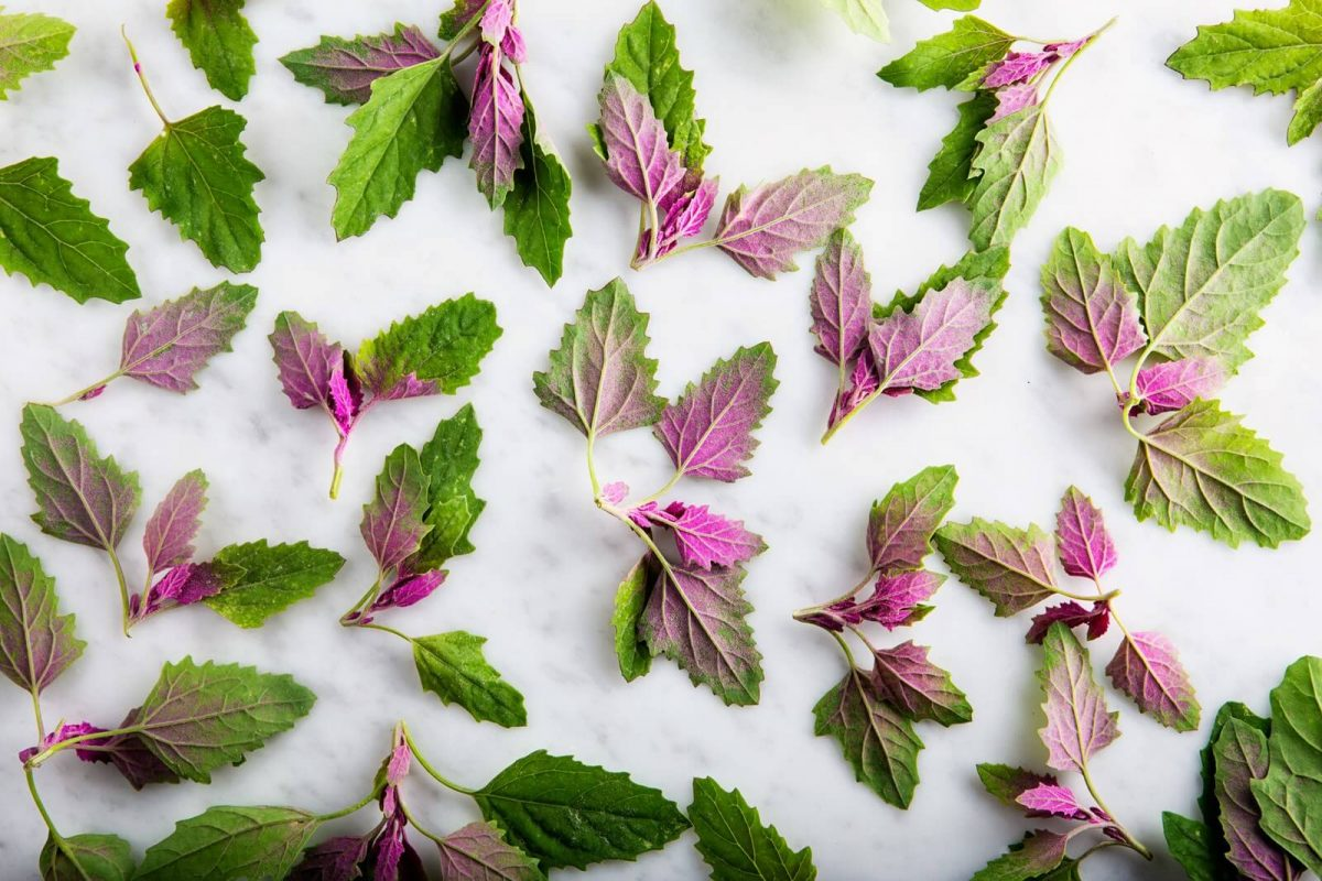 Easy salad greens to grow: Magenta Spreen