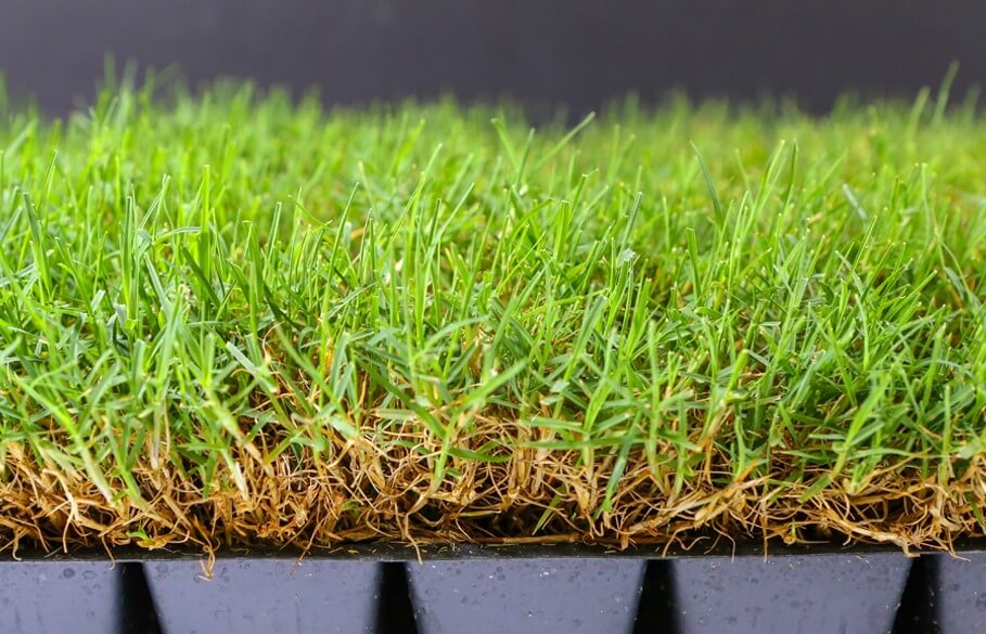 bermuda grass in small pots