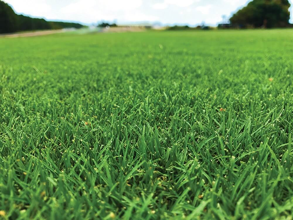 lawn filled with bermuda grass