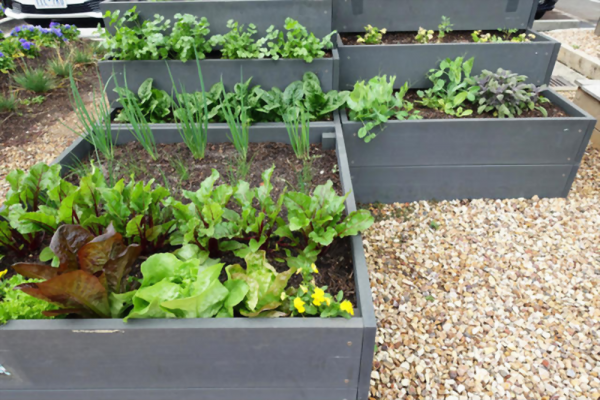 how to grow vegetable seeds