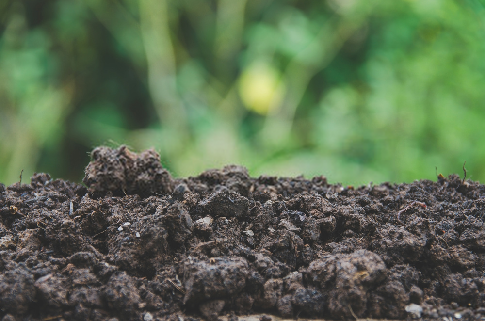 rich soil for planting vegetable seeds