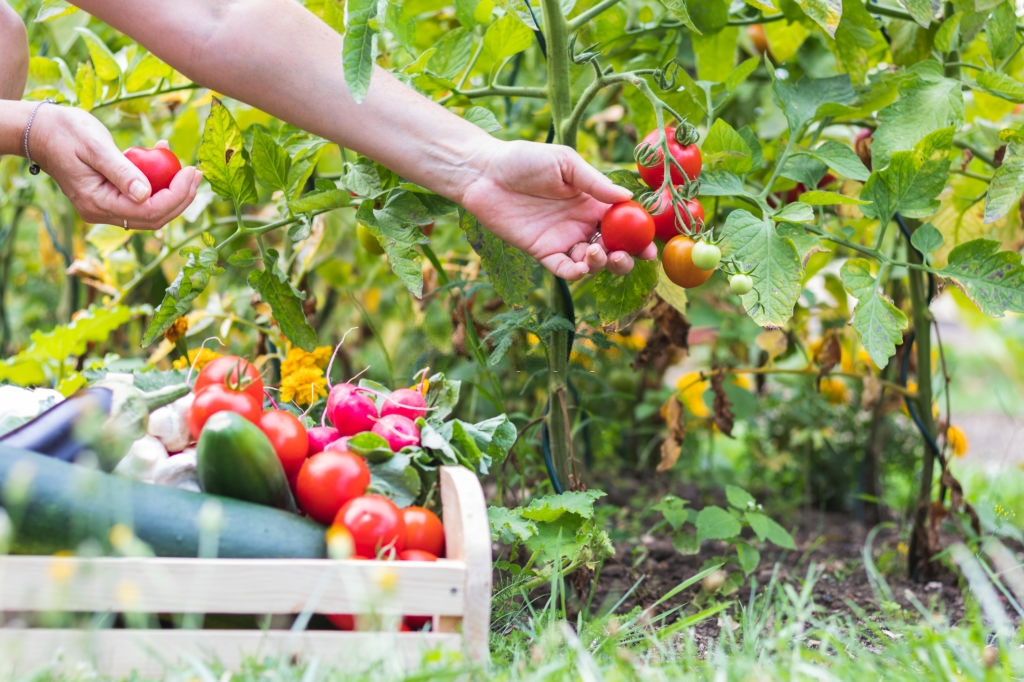 Keeping Garden Healthy And Maximise Harvest