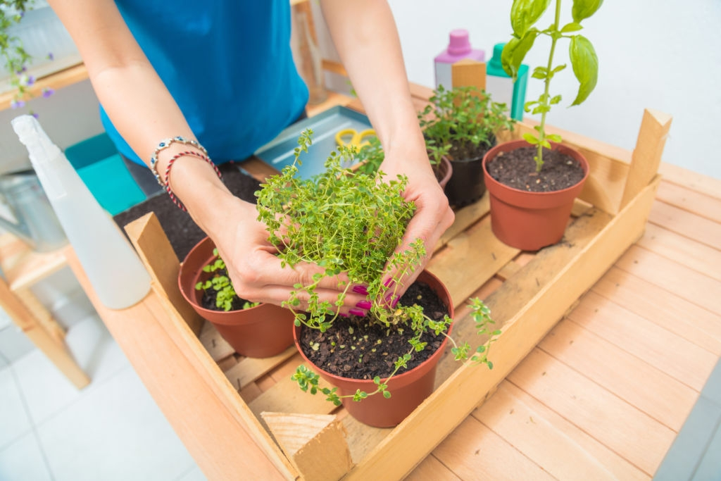 Vegetables to grow at home