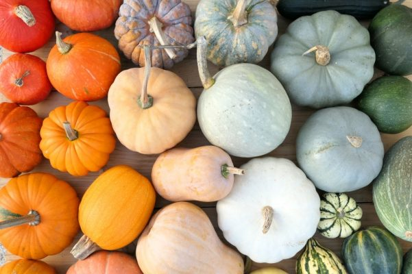difference between pumpkin and squash