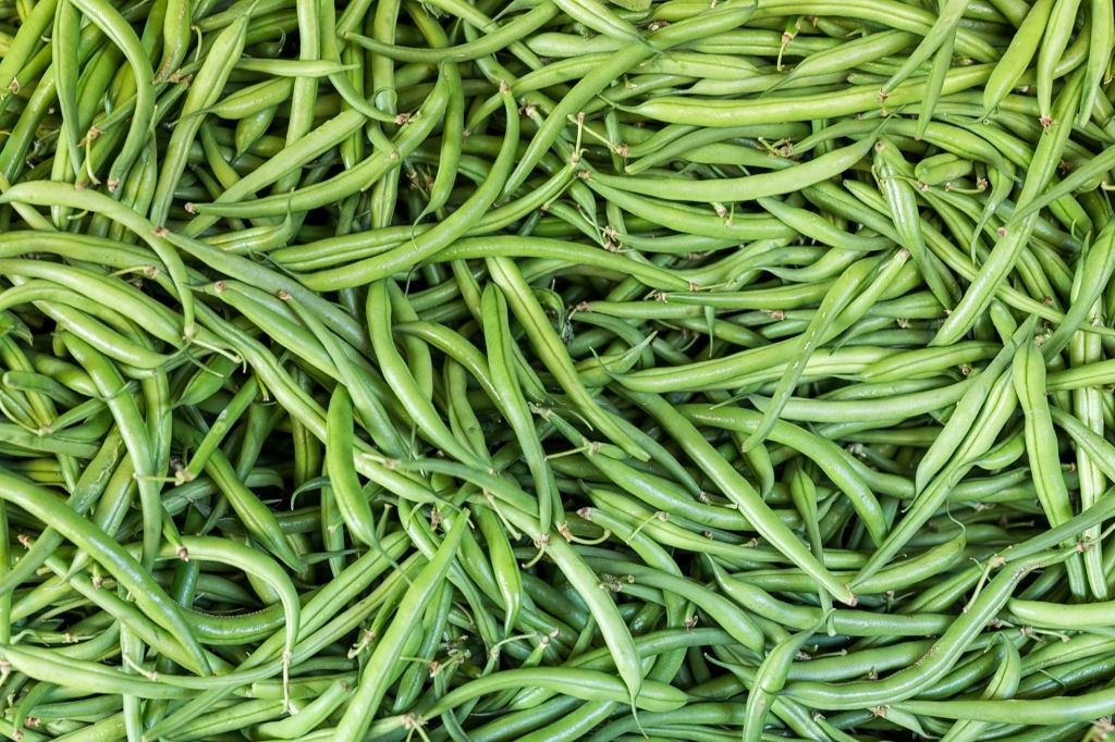 How to Plant French Beans