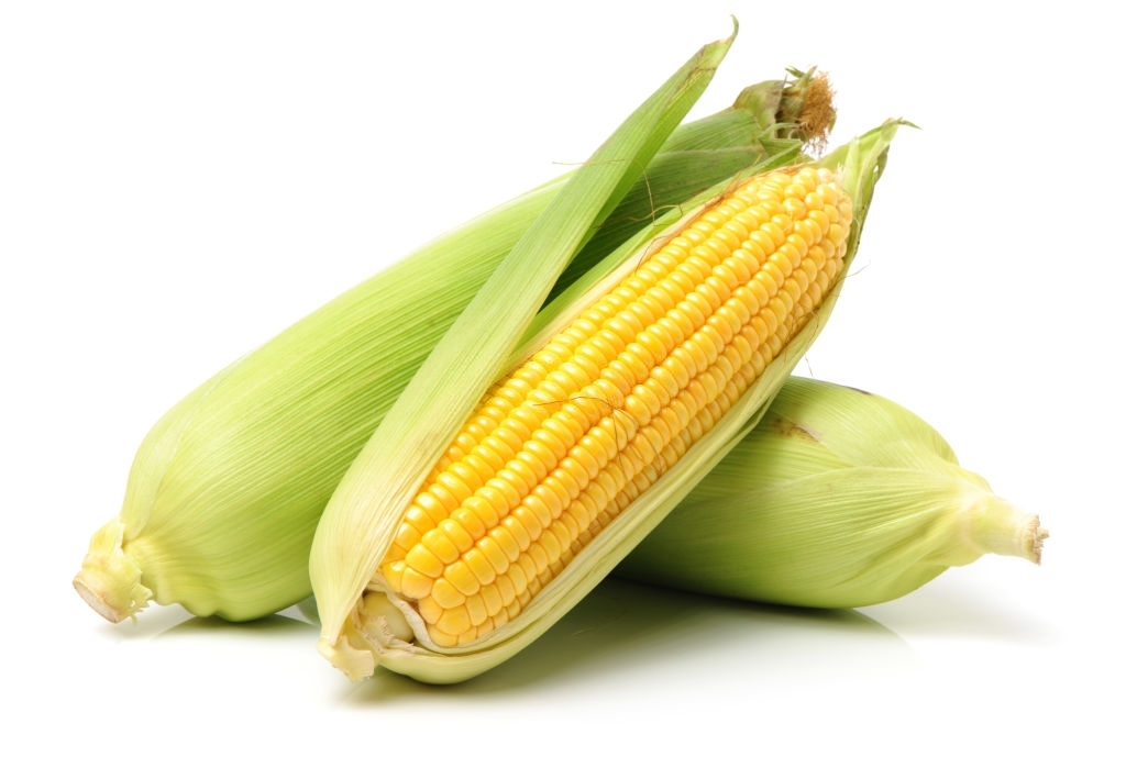 growing corn in tropical weather