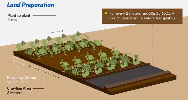land preparations for watermelon seeds