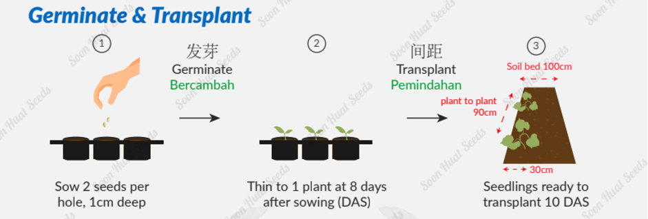 germinate and translate seeds instruction